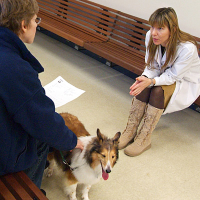 Preparing for Your Pet's Visit at Tufts Veterinary Emergency